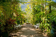 Tropical Garden. Hell-Bourg, Maison Folio, Reunion - Tropical Garden with benches, flowers, trees and a fountain Royalty Free Stock Photography
