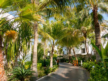 Tropical garden of hotel in Dubai Stock Photography