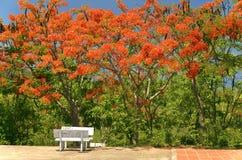 Free Tropical Garden In Vietnam Stock Photo - 46924030