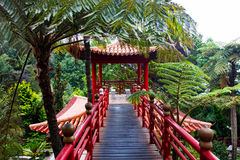 Tropical garden in the Japanese style Stock Photos