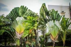 Tropical garden in Koh Samui Thailand Stock Image