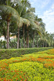 Tropical garden. The landscape of tropical garden royalty free stock photography