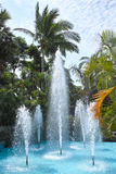 Tropical garden. The landscape of tropical garden with fountain and coconut trees stock photography