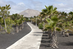 Tropical garden in Lanzarote Royalty Free Stock Photography