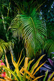 Tropical Garden lush green foliage and plants Royalty Free Stock Images