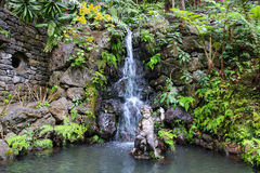 Tropical Garden Madeira Royalty Free Stock Photography