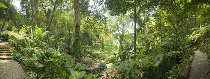 Free Tropical Garden, Malaysia Stock Photos - 34408683