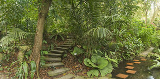 Tropical Garden, Malaysia Royalty Free Stock Photo