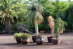 Tropical garden in Oasis Park on Fuerteventura. Canary Island. Royalty Free Stock Images