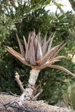 Tropical garden in Oasis Park on Fuerteventura Royalty Free Stock Photos