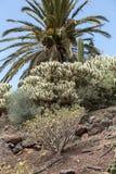 Tropical garden in Oasis Park on Fuerteventura. Royalty Free Stock Photos