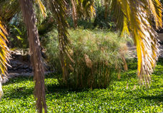 Tropical garden in Oasis Park on Fuerteventura. Canary Island. Stock Images