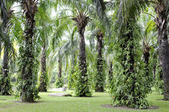 Tropical garden with palm Stock Image