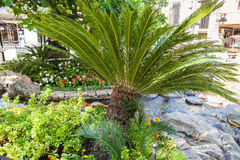 Tropical garden with palm and flowers in sunlight Royalty Free Stock Photography