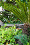Tropical garden with palm in sunlight Stock Image