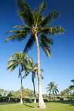 Tropical garden with palm trees. And blue sky, copy space Stock Images