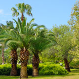 Tropical garden with palm trees Stock Photo