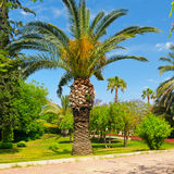 Tropical garden with palm trees and lawn Stock Images