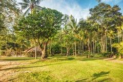 Tropical garden Stock Image