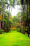 Tropical garden with palm trees and rendered with Royalty Free Stock Image