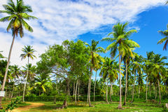 Tropical garden with palm trees Stock Image