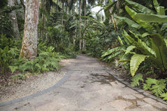 Tropical Garden Path Stock Photos
