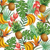Tropical garden with pineapple and banana cluster. Vector illustration design fruits, leaves and flowers, summer and exotic concept Royalty Free Stock Photos