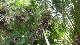 Tropical garden in Poltava. Tropical garden with beautiful trees in Poltava, shooting in 4k stock video