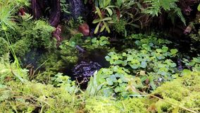 Tropical garden with a pond. Underwater Fountain stock footage