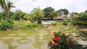Tropical garden with pond, Victoria Regia and palms. Beautiful tropical garden with pond, Victoria Regia and palms in Santa Cruz de la Sierra, Bolivia stock video