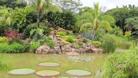 Tropical garden with pond, waterfall, Victoria Regia and palms. Beautiful tropical garden with pond, waterfall, Victoria Regia and palms stock footage