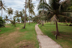 Tropical garden and  the road to sea beach. A tropical garden with palm trees overlooking the sea with blue sky Stock Photos