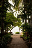 Tropical garden and  the road to sea beach. A tropical garden with palm trees overlooking the sea with blue sky Royalty Free Stock Photography