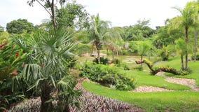 Tropical garden in Santa Cruz, Bolivia stock video footage