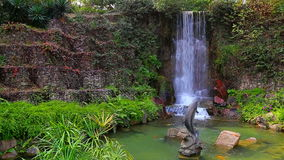 Tropical garden. With spring foliage and a waterfall stock video