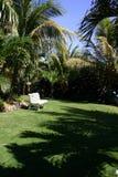 Tropical garden in summer Royalty Free Stock Photos