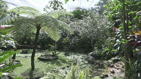 Tropical garden in sunny day, Bali, Indonesia. Tropical garden in sunny day, Bali Indonesia stock video