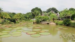 Tropical garden with Victoria Regia stock footage
