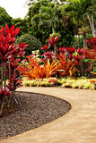 Tropical Garden Stock Photography