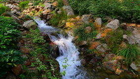 Tropical garden with waterfall. Tropical garden with colorful plants and a small waterfall stock video footage