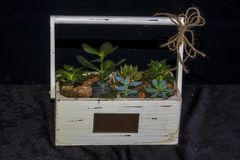 Tropical gardens created in terrarium glass containers Stock Photography