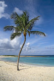 Tropical getaway. Beautiful palm tree on tropical beach with white sand and clear green water Royalty Free Stock Photo