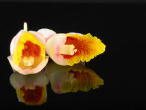 Tropical Ginger Flowers Stock Images
