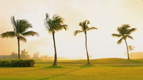 Tropical golf course, palm trees and golden sunset. Dominican Republic, Punta Cana.  stock video