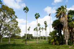 Tropical golf course with palms Stock Images