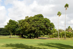 Tropical golf course with palms Stock Photography