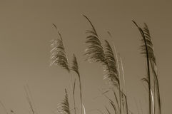 Tropical grass Royalty Free Stock Photos