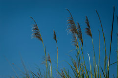 Tropical grass Royalty Free Stock Photo