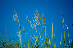 Tropical grass Royalty Free Stock Images