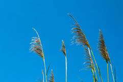 Tropical grass Stock Image